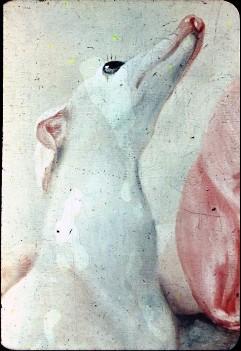 Ausschnitt: Kopf des Hundes, Aufn. Cürlis, Peter, 1943/1945
